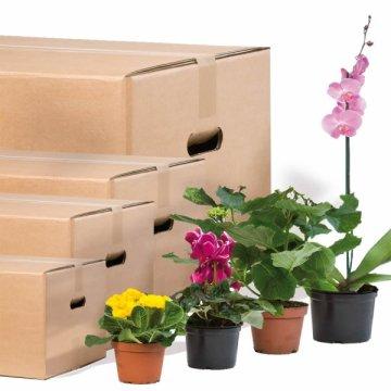 kartons mit tragegriffen transpack krumbach. Black Bedroom Furniture Sets. Home Design Ideas